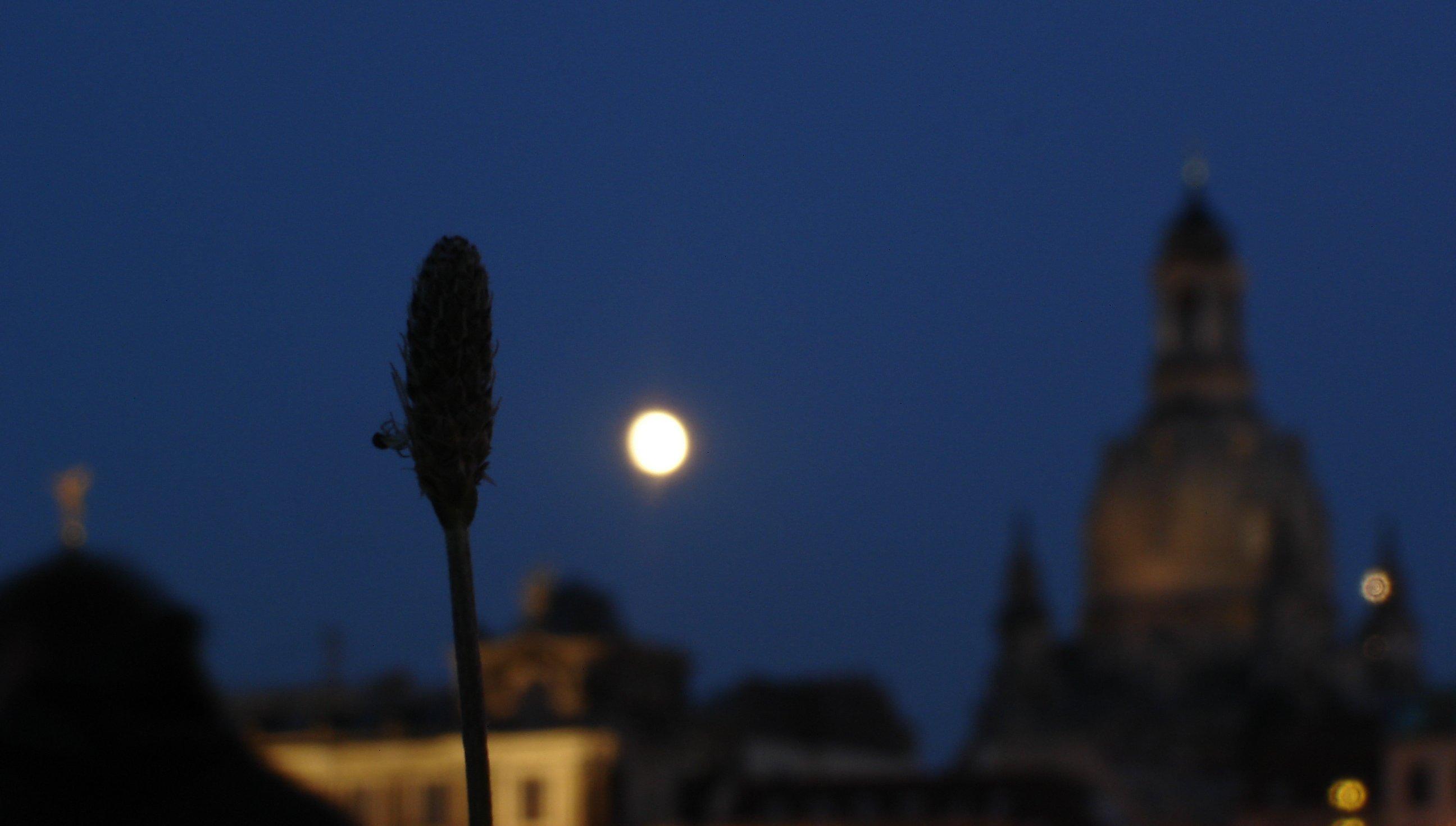 Spinne im Mondlicht vor der Frauenkirche
