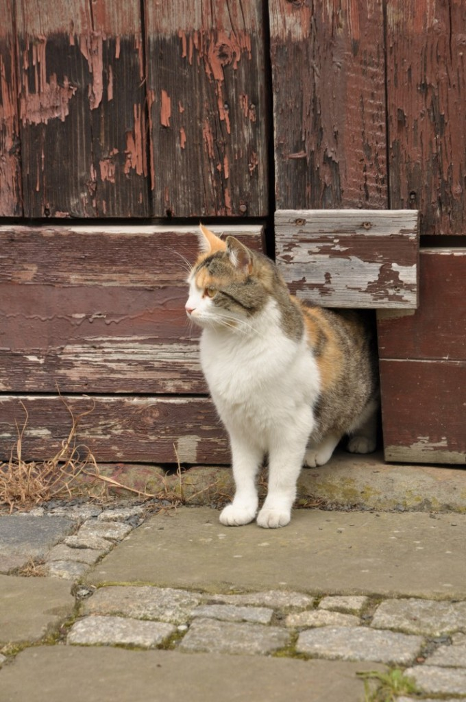 Katze ausm Tor